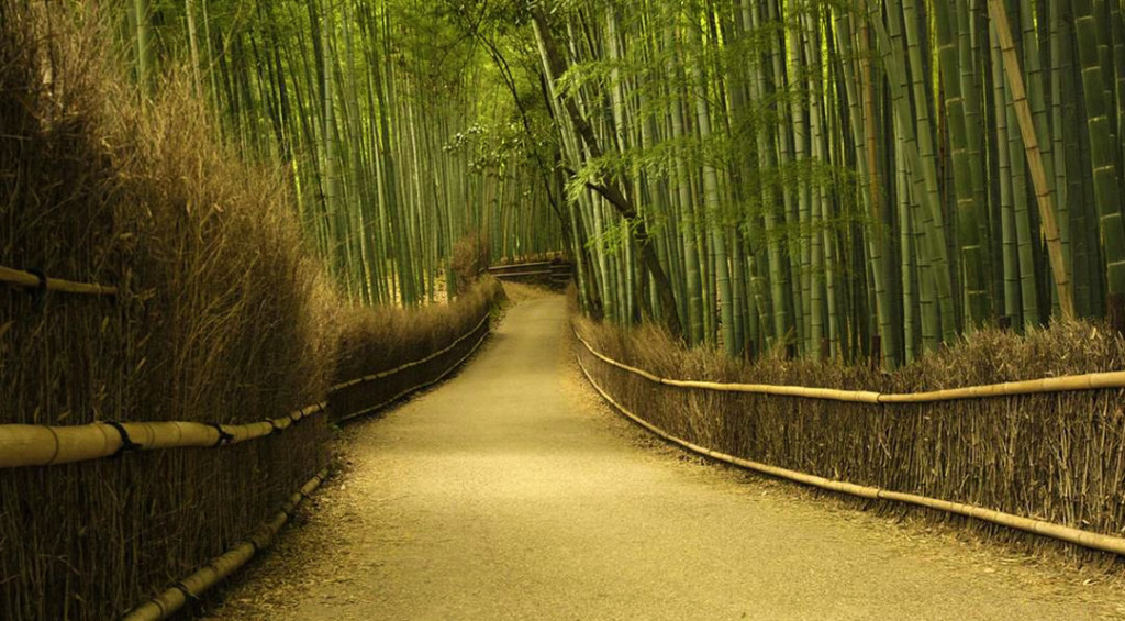 Sagano-Bamboo-Forest-Japan-sacrelegious- Breathtaking Places