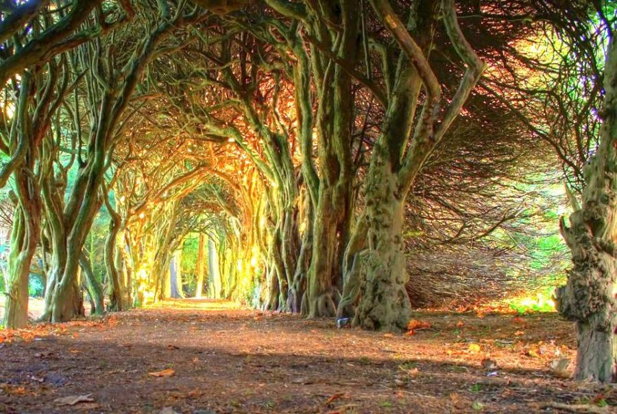 Tree Tunnel of Gormanston College in County Meath.