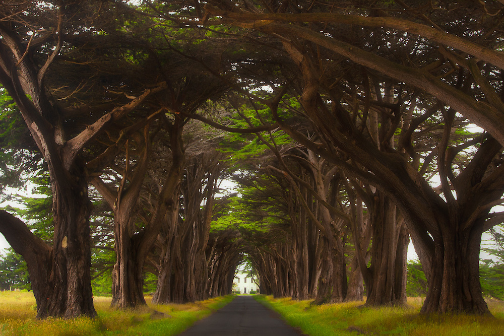 Tree Tunnel of Point Reyes National Seashore In Northern California.