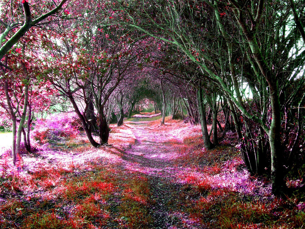 Magical tree tunnel of Sena De Luna located in Spain's Castile and León region