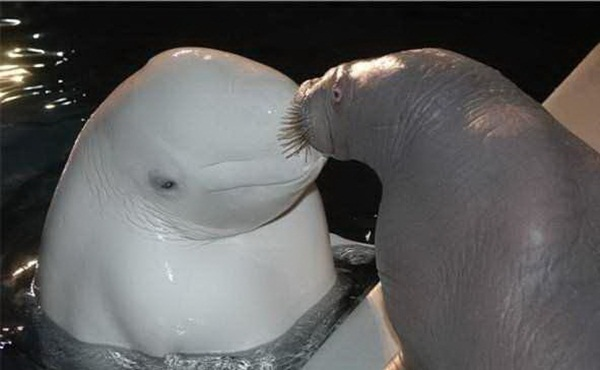 Water animals, Animals ready to mate with each other, animals smooching each other