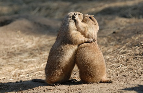Animals kissing each other
