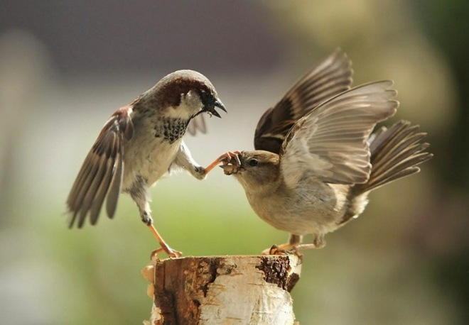 unusual actions done by birds, birds are in action