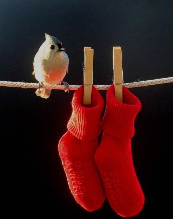 Birds are in action, planning to get into the socks?