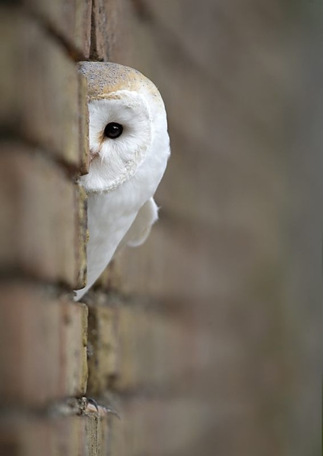 Birdsareinaction, spy owl