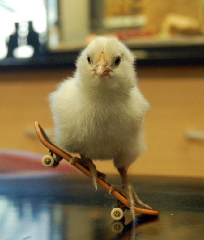 Bird doing skating