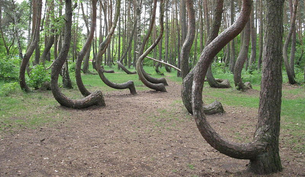 Crooked Forest 2