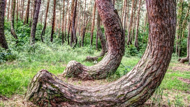Crooked Forest 4