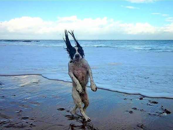 Crazy dog photos, Amazing dog pictures clicked right in time, just in time photos, funny dog photos, best photography, hilarious dog photos, perfectly timed photos