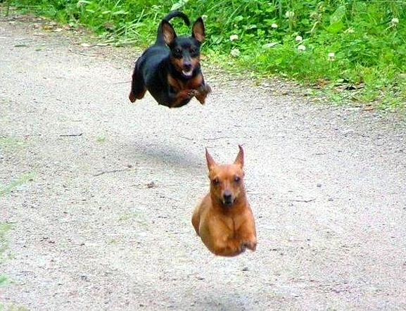 Crazy dog photos, Amazing dog pictures clicked right in time, just in time photos, funny dog photos, best photography