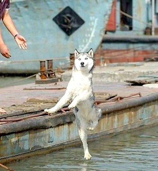 Amazing dog pictures clicked right in time, just in time photos