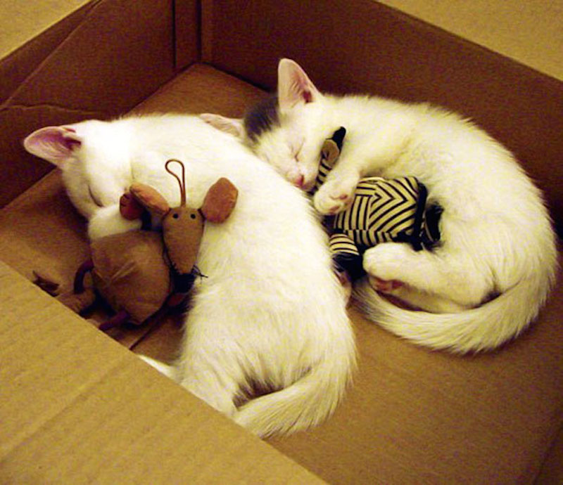 cute-animals-sleeping-stuffed-toys