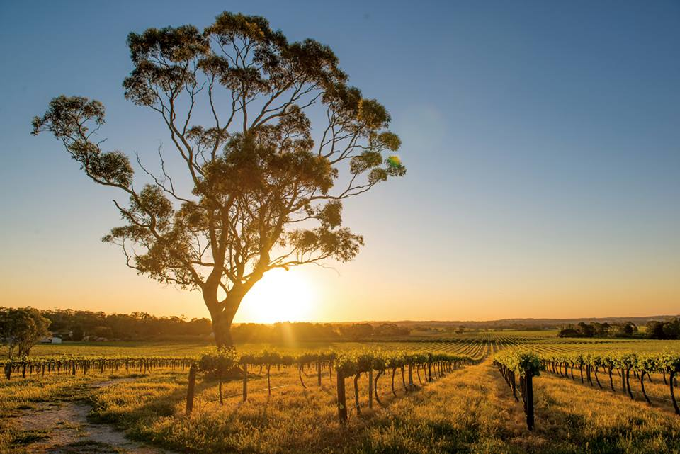 Have a gourmet Barossa Valley weekend in South Australia