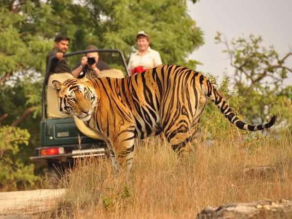 Best Wildlife parks in the world - Bandhavgarh National Park