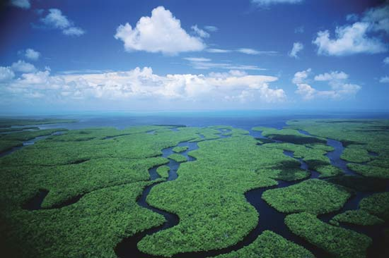 Best Wildlife parks in the world - Everglades National Park