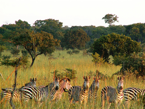 Best Wildlife parks in the world - Kafue National Park