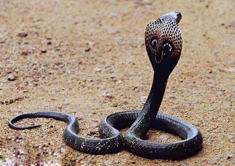 Most Dangerous Animals - Snake