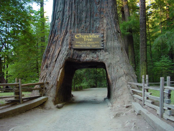 Must Visit Heritage Sites In America - Redwood National and State Park