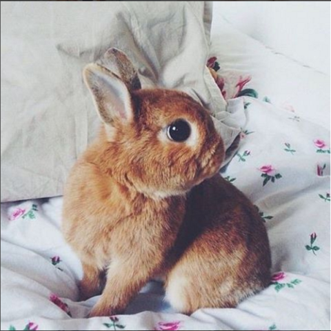 Cute little bunny rabbit, rabbit pictures, animal pics, animal lovers, bunnies, photos, pictures
