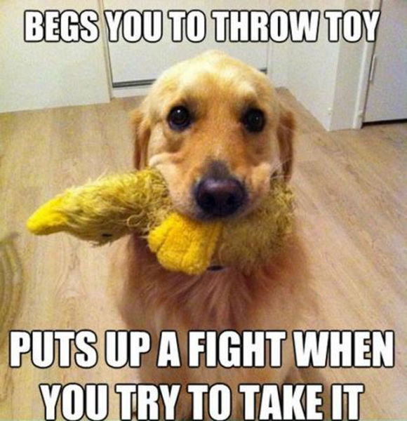 Funny activities, dogs, cute, little adorable, laughter dose, hilarious, humor, lol, pictures, photos, images, cuteness, laughing therapy, animals, animal lovers, love animals, innocent