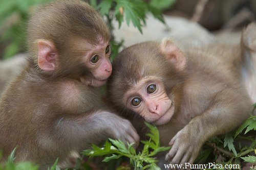 Funny monkeys, Monkeys, hilarious expressions, animals, animal pictures, adorable monkeys