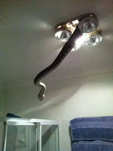 Scary photos, scary situations, so scary, bad, sad, omen, Snake