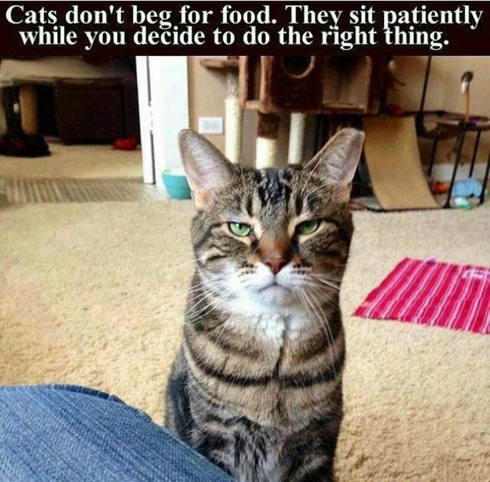 funny animal pictures, funny cat pics