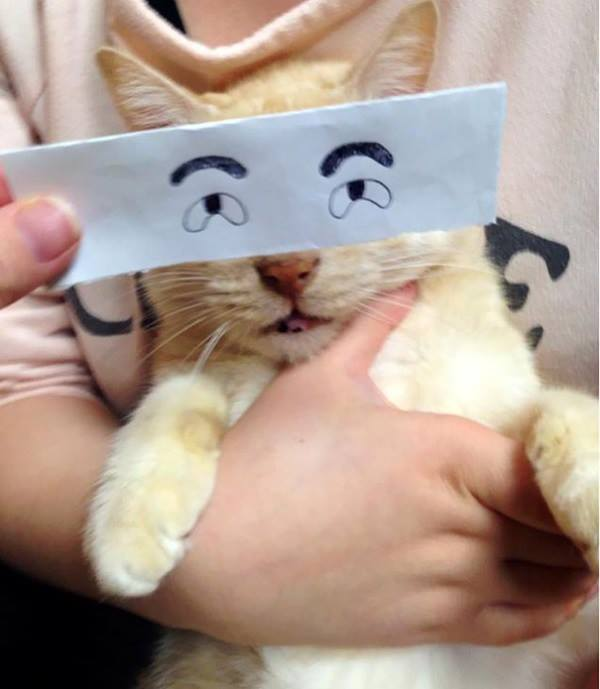 funny cats, funny anime eyes, cats with funny anime eyes