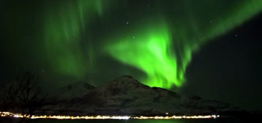 Northern lights, video, whales in Northernlights
