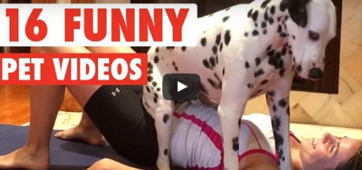 hilarious pet videos, pet video compilation