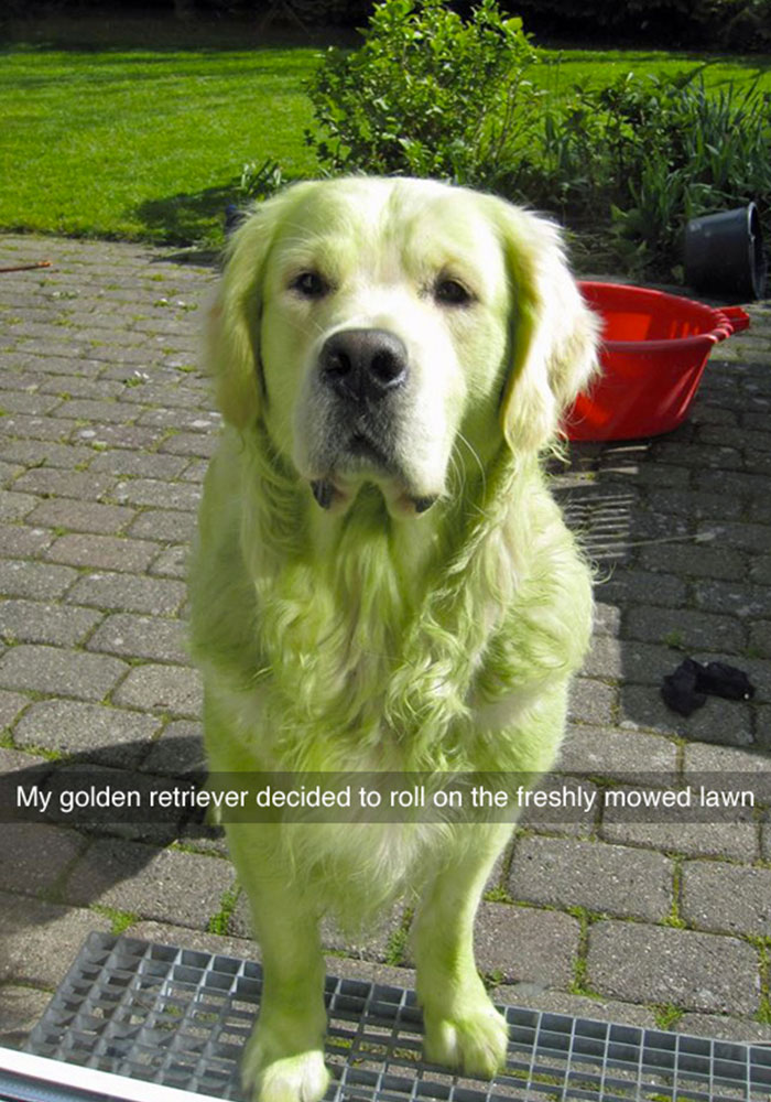 funniest dog snapchats, funny snapchats, snapchat stories, funniest snapchat stories