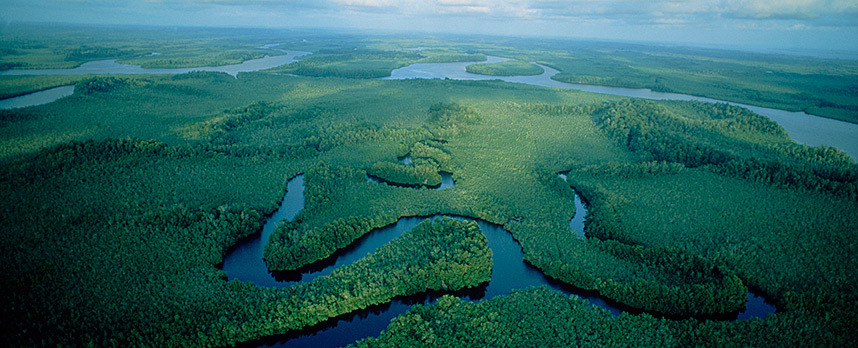 Amazon Rainforest, South Africa