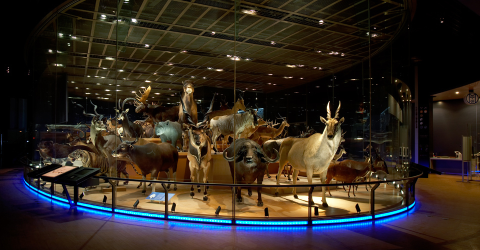 Places to visit in Tokyo - National Museum of Nature and Science