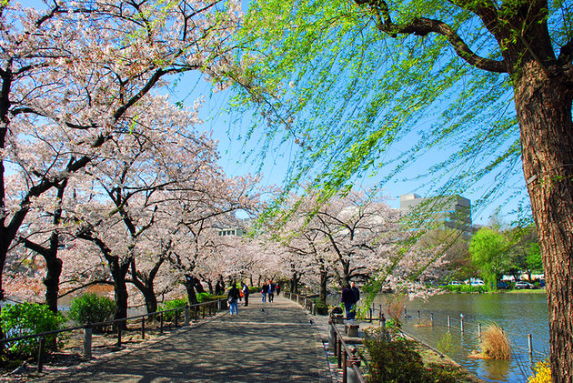 Places to visit in Tokyo - Ueno Park and Zoo