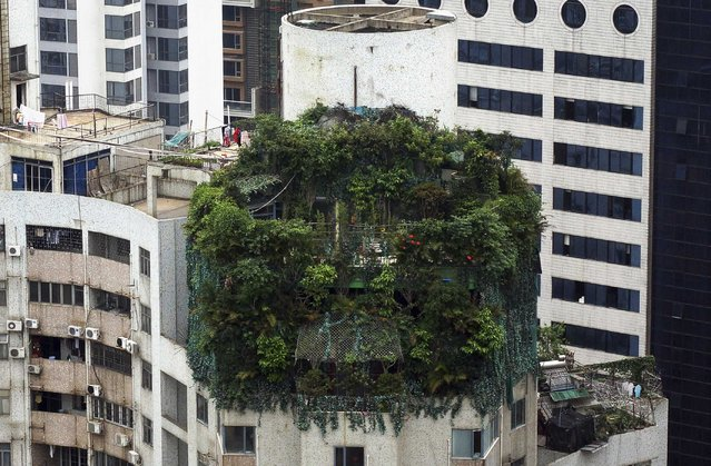 Strange Houses - Illegal construction covered by green plants in Guangdong